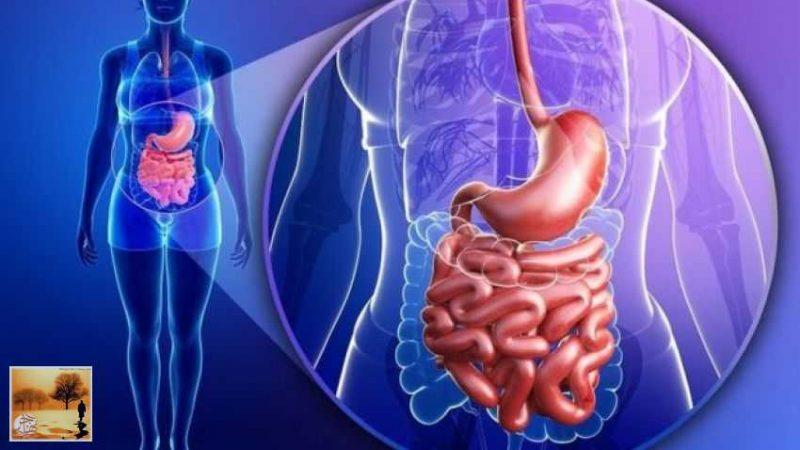 هذه الأيام التي يتخلص فيها الجسد من السموم أثناء الصيام