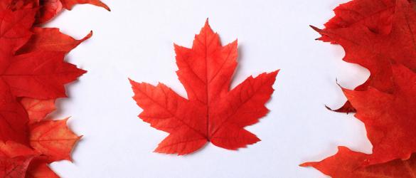 كندا تستقبل أكثر من 11 ألف مهاجرا في أغسطس 2020