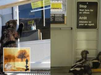 بالصور: الحيوانات ترفض الالتزام بقواعد السفر على الحدود الكندية | مهاجر