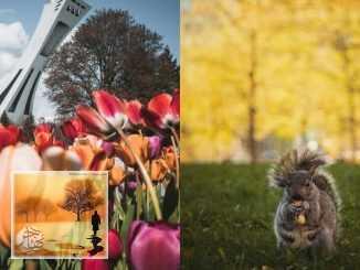 مونتريال على موعد مع طقس صيفي ومشمس مع ارتفاع درجات الحرارة | مهاجر