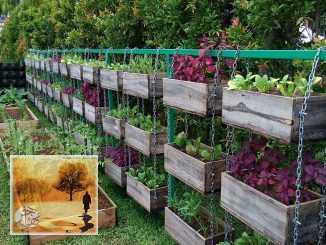 أفضل 10 أفكار لهواة زراعة الخضروات يمكن تنفيذها بسهولة | مهاجر